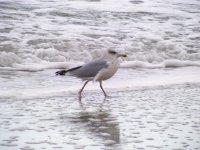 Morze, mewa